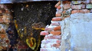 O uriasa colonie de albine a oprit azi lucrarile pe un santier - FOTO si VIDEO